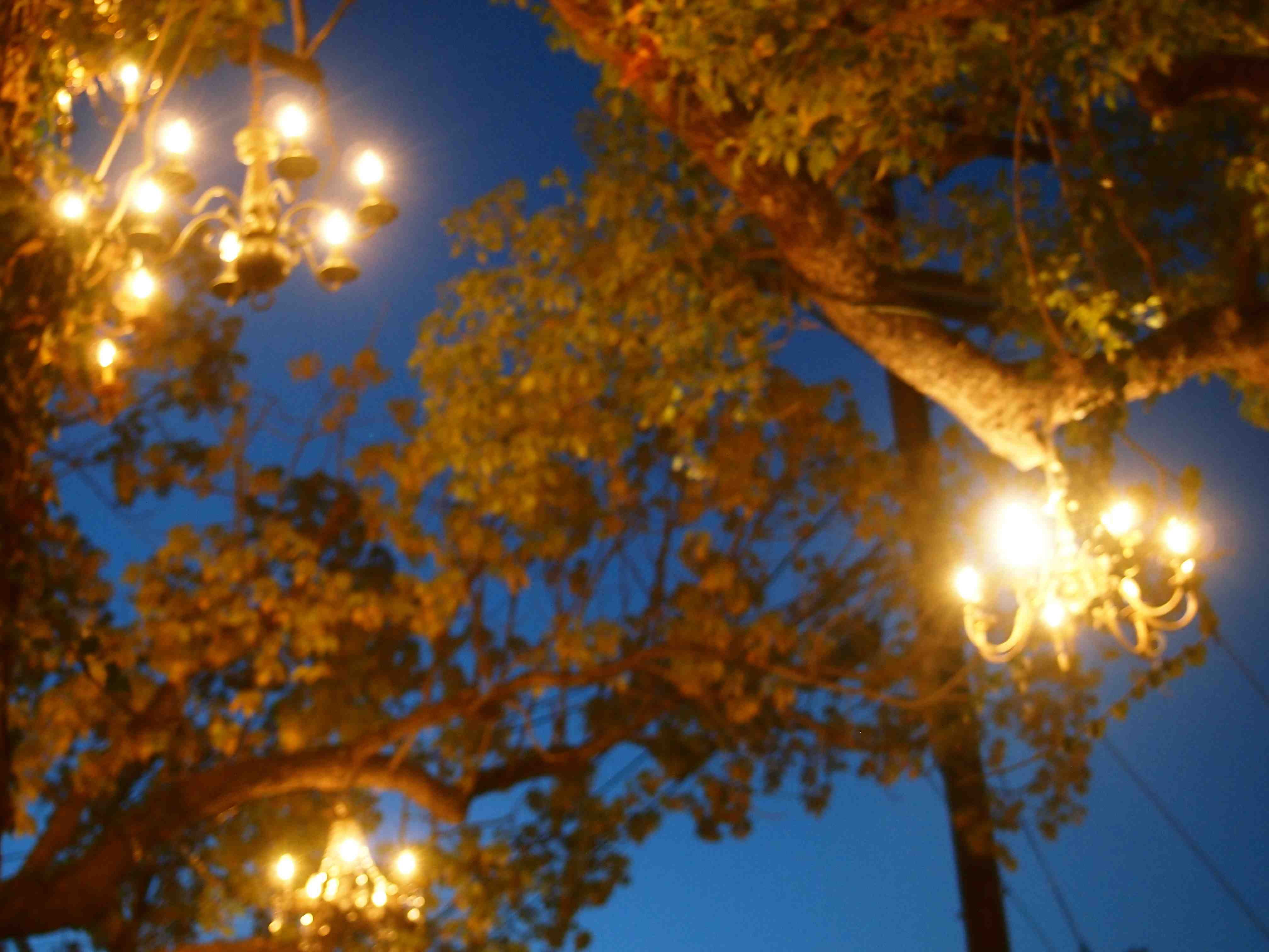 a chandelier tree sparkles in silver lake. – teamgloria, inc.